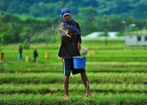 Agricultura y capitalismo
