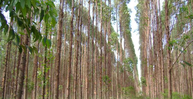 Reforestar