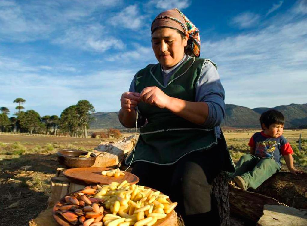 Mujer pehuenche preparando la semilla del pehuén.
